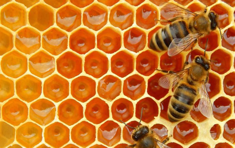 Honungsbin är ett släkte i insektsordningen steklar som tillhör familjen långtungebin. Och du är nog en av många som irriterat dig på dem!