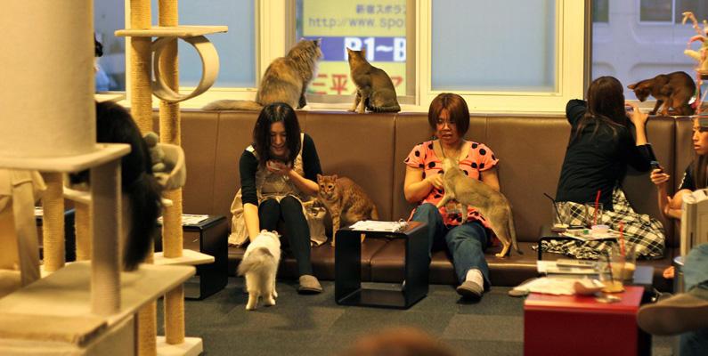"""I Japan finns det så kallade """"katt-cafés"""", som under senaste decenniet blivit oerhört populärt. Ett katt-café innebär att du kan sätta dig och avnjuta en kopp kaffe samtidigt som du gosar med ett gäng katter"""
