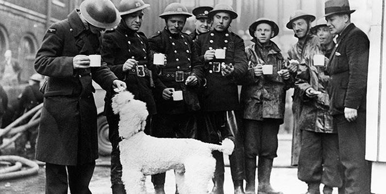 Pudlar är en av många hundraser som användes flitigt under andra världskriget.