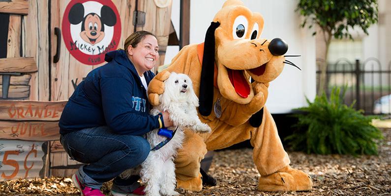 Om du har tänkt att semestra på Disney World i USA med ditt husdjur kommer du inte att bli insläppt om du inte kan uppvisa ett giltigt vaccinationsbevis av djuret i fråga.