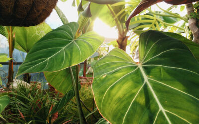 10 fakta du antagligen inte visste om växter
