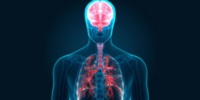 """Om du använder en förångad medicin - eller kanske röker - så tar det bara sju sekunder för ångorna att nå hjärnan genom lungorna. Att det tar så pass """"lång"""" tid beror på lungornas storlek."""