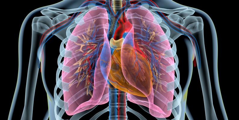 Syre spelar egentligen bara en liten roll i andningen. Luften vi andas in innehåller nästan exakt 21% syre, men våra kroppar använder endast 5% - resten andas ut igen.
