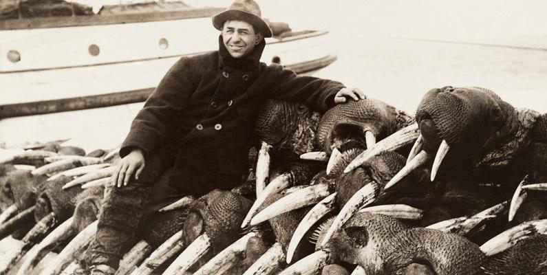 Inuiternas jakt har aldrig utgjort något direkt hot mot valrosspopulationen. Den västerländska jakten har däremot utgjort ett tydligt hot, särskilt jakten efter de eftertraktade betarna som består av valrosselfenben. Beståndet vid Amerikas östkust, söder om Labradorhalvön, utrotades före 1800-talet. Bara mellan 1925 och 1931 dödades uppskattningsvis hela 175 000 valrossar.